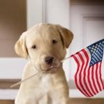 Puppy_USflag_1024x768